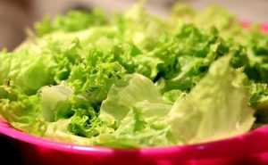 Carbs In Lettuce
