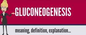 Gluconeogenesis Definition
