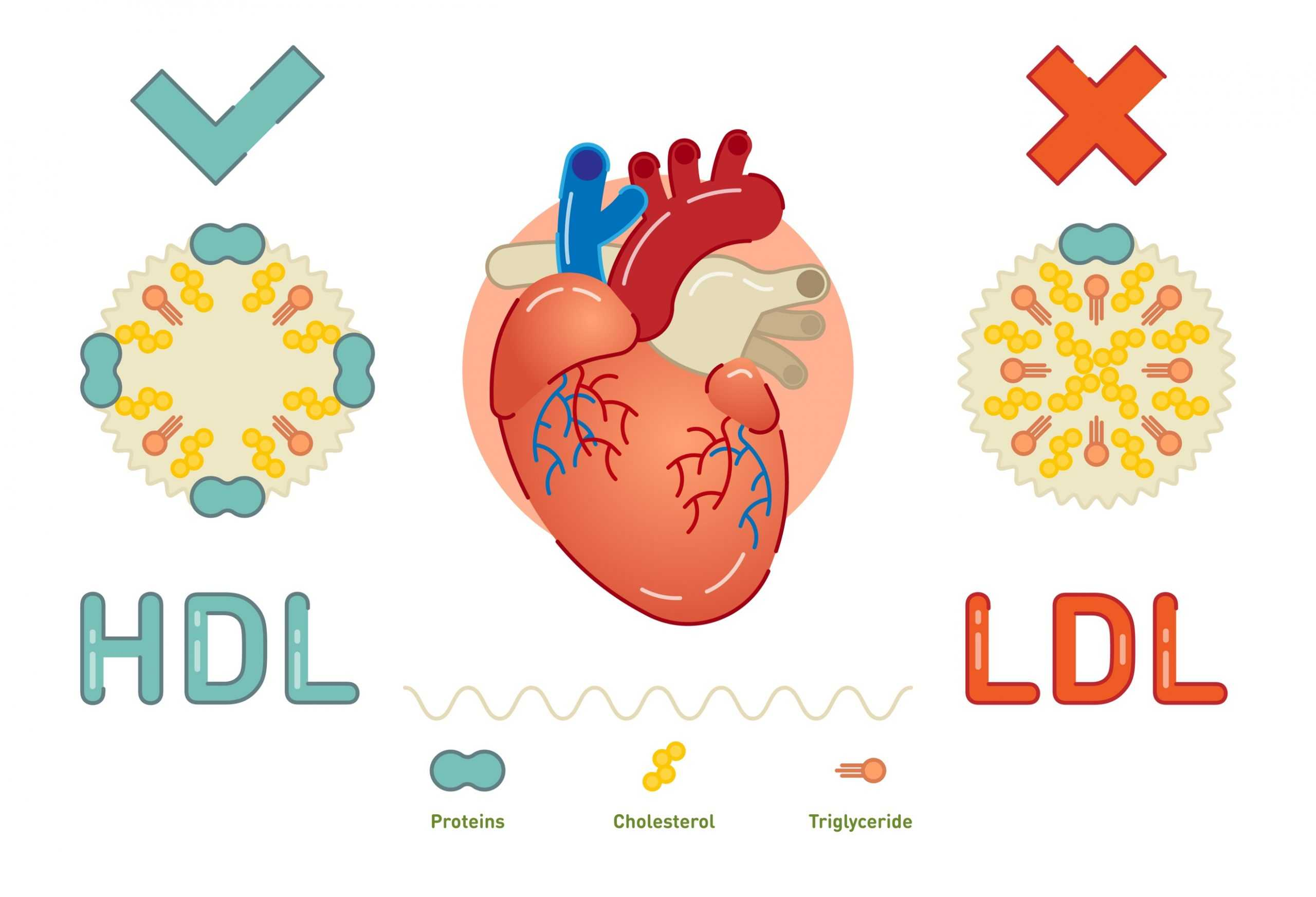 Keto Diet and LDL Cholesterol: Is LDL Really that Bad: Correlation with Low Carb Keto Diet Bariatric Station