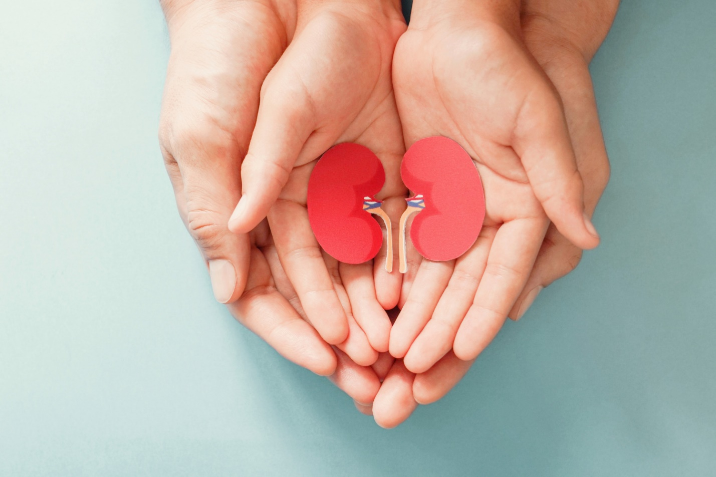 C:\Users\Dell\Downloads\adult-child-holding-kidney-shaped-paper-world-kidney-day-national-organ-donor-day-charity-donation-concept.jpg